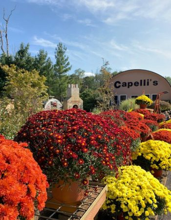 Capelli's