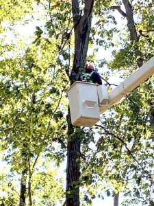 Jrs tree service monmouth county
